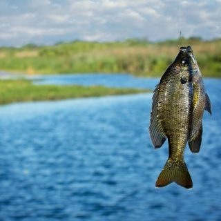 Patience and perseverance: the lure of fishing